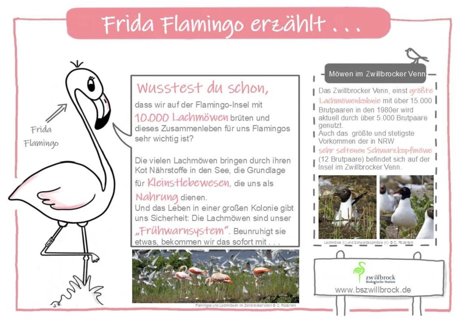 Frida Flamingo Umweltbildung