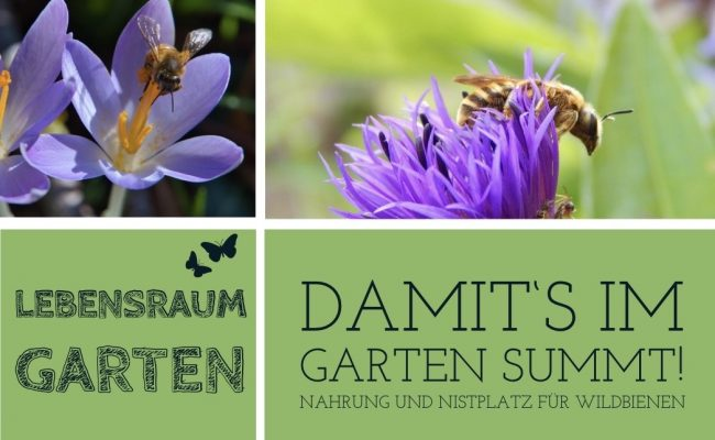 Seminar_GartenWildbienen
